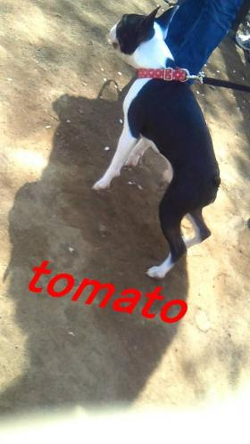 pol2012sakura-7_convert_20120413003937.jpg