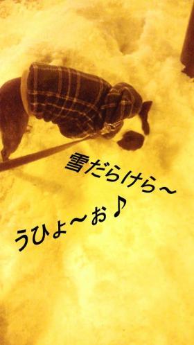 polyuki3_convert_20120128002947.jpg