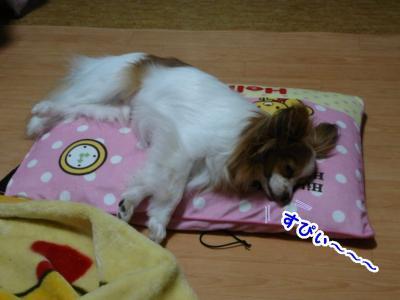 枕のベッド♪