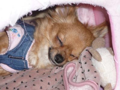 暇なときは寝るに限る!