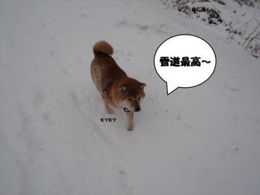 1_convert_20100212230932.jpg