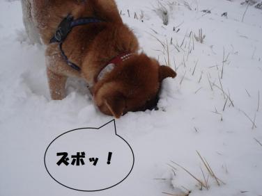 4_convert_20100212231041.jpg