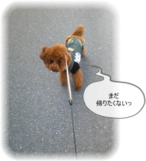 _Image691.jpg