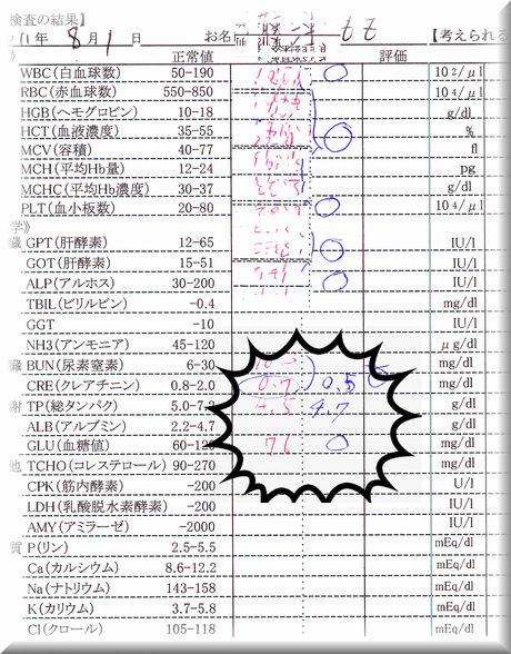 もも血液検査20110801