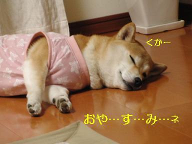 おやすみ!ももちゃん♪