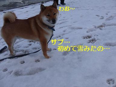 サブちゃん雪初体験!