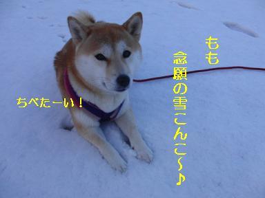 雪こんこ、嬉しいね~!