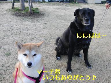 マーチくんへ!