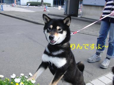 りんちゃん