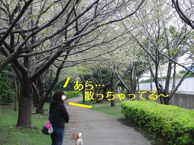 葉桜やん…
