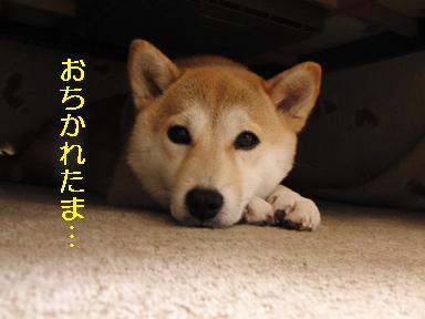 おちかれ0407