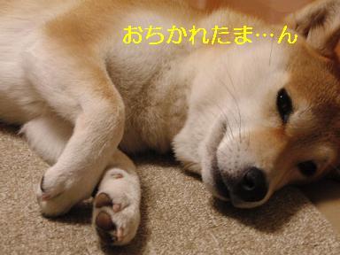 おちかれ0414