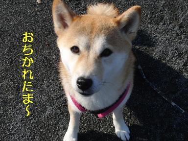 おちかれ0421