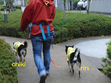 お散歩へ!