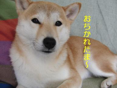 おちかれ0427