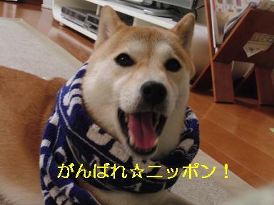 がんばれ~!