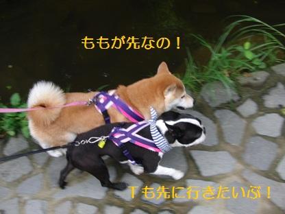 競争かい・・・