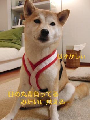 日本犬代表で!