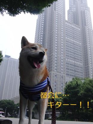 ももin新宿!