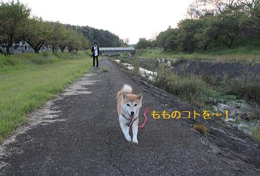 ステップ!!