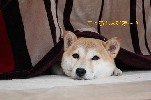 よッ!おこた犬!