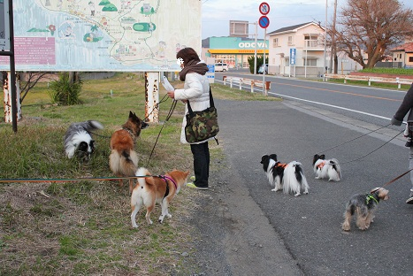 みんなでお散歩♪