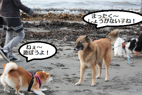 遊んで~!!
