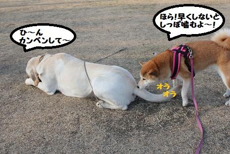 がんばれ!ピンク!