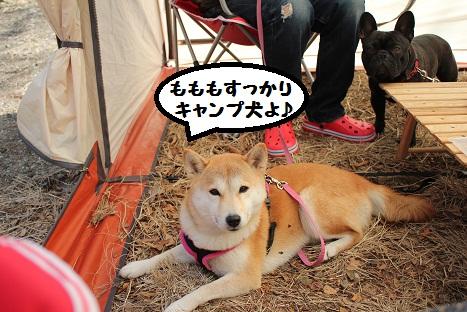 キャンプ犬ね~