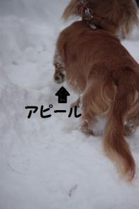 冷たいの。