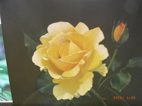 新作黄色のバラ