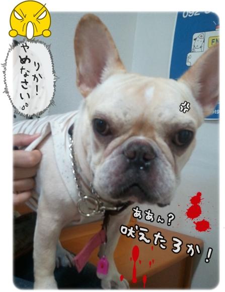 2011-08-10_12_00_02.jpg
