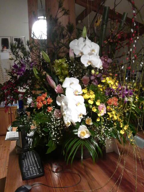 2011年花