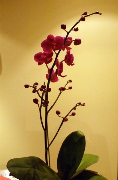 orchid0911.jpg