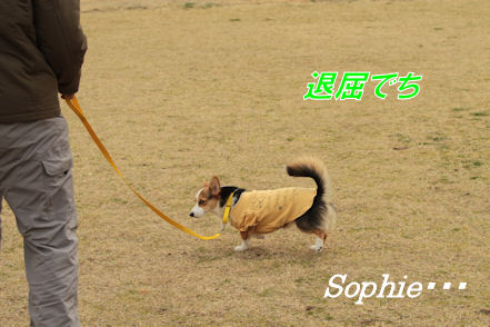 ソフィーです