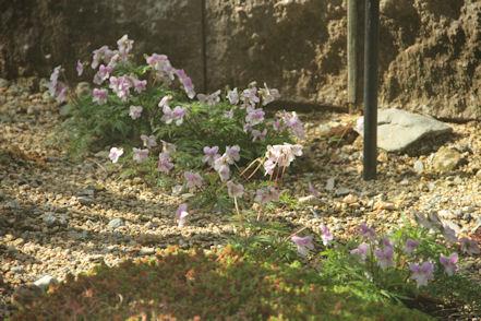 菫のは~な~咲く~ころ~
