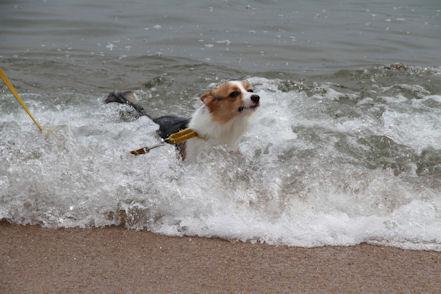 お、溺れるぅ!!!