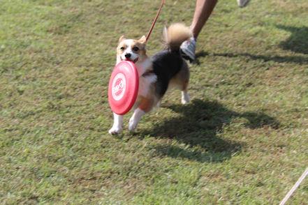 Disc Dog 誕生でち~♪