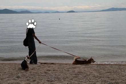 湖畔を歩くワンズ