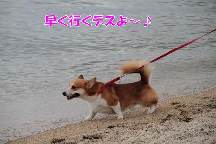 泳ぐですーっ!!!