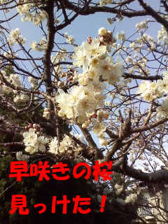P2012_0315_152901.jpg