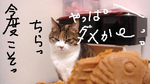 まめずき (3)