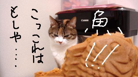 まめずき (4)
