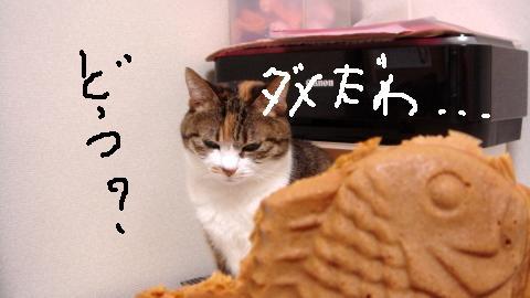 まめずき (6)