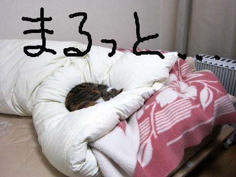 ゾーキン (9)