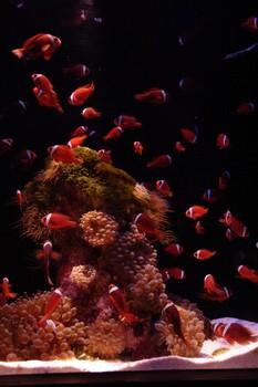 また熱帯魚飼っても良いかな