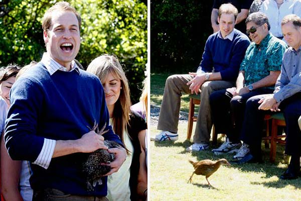 Prince William - Kiwi