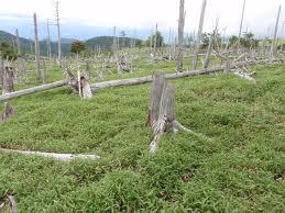 熊野国立公園2大台ヶ原