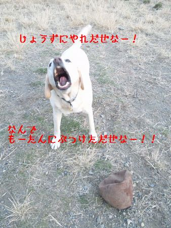 CAG4G07O.jpg