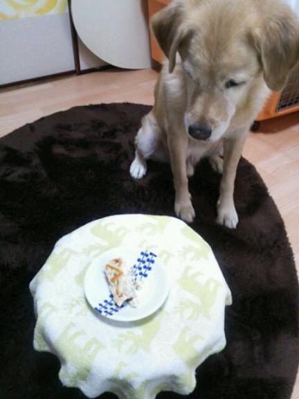 OKURA CAKE 5